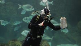 Duiker met vissen in een aquarium stock footage