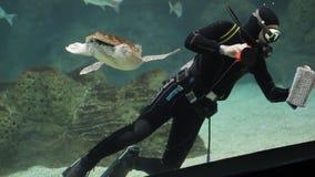 Duiker met vissen en schildpad in een aquarium stock footage