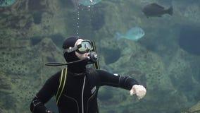 Duiker met vissen en schildpad in een aquarium stock video