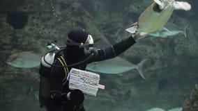 Duiker met vissen en schildpad in een aquarium stock videobeelden