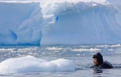 Duiker op het ijs Royalty-vrije Stock Afbeelding