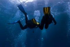 duikers stock fotografie