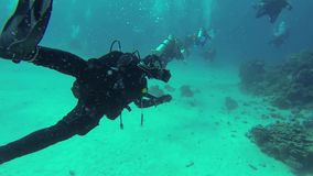 Duikers die langs de bodem zwemmen stock videobeelden