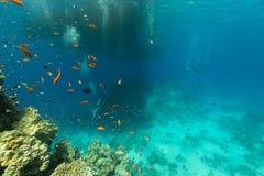 Duikers en het aquatische leven in het Rode Overzees royalty-vrije stock fotografie