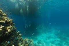 Duikers en het aquatische leven in het Rode Overzees royalty-vrije stock foto's