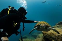 Duikers en schildpad stock afbeeldingen