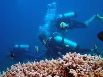 Duikers in Ertsader Corall Stock Foto's