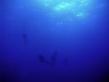 Duikers in het diepe blauw Stock Foto's