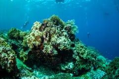 Duikers, het koraal van het paddestoelleer in Banda, de onderwaterfoto van Indonesië Royalty-vrije Stock Afbeelding