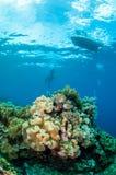 Duikers, het koraal van het paddestoelleer in Banda, de onderwaterfoto van Indonesië Royalty-vrije Stock Foto