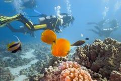 Duikers op het koraalrif Stock Foto's