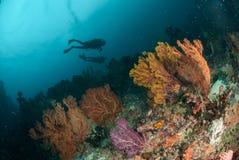 Duikers, overzeese ventilator in Ambon, Maluku, de onderwaterfoto van Indonesië Stock Afbeeldingen