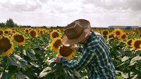 Duim omhoog gelukkige landbouwer die zijn hoed op de zonnebloem zetten stock footage