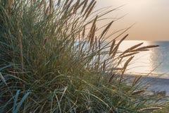 Duin met groen gras Mening voor het strand Royalty-vrije Stock Foto
