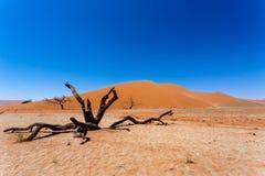 Duin 45 in sossusvlei Namibië met dode boom Stock Afbeeldingen