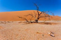 Duin 45 in sossusvlei Namibië met dode boom Stock Fotografie