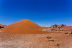 Duin 45 in sossusvlei NamibiaDune 45 in sossusvlei Namibië, mening Stock Afbeeldingen