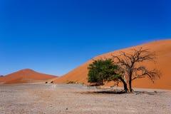 Duin 45 in sossusvlei NamibiaDune 45 in sossusvlei Namibië, mening vanaf de bovenkant Stock Foto's