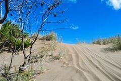Duinen in Argentinië Stock Foto's