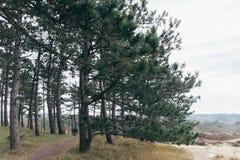 Duinen in Bergen aan zee, Nederland Royalty-vrije Stock Afbeeldingen