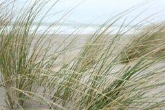 Duinen bij de Noordzee stock afbeelding