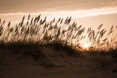 Duinen bij zonsondergang stock foto's