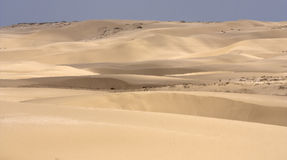 Duinen in de woestijn royalty-vrije stock foto