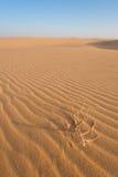Duinen in de woestijn Royalty-vrije Stock Afbeelding