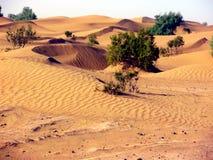 Duinen in de Woestijn van Ergchebbi Stock Afbeeldingen