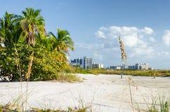 Duinen dichtbij oceaanvoorzijde in Florida Stock Afbeeldingen