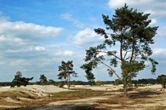 duinen lange Стоковая Фотография RF