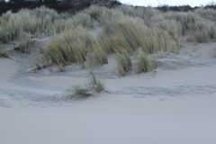 Duinen met gras bij de kust van de Noordzee in Zeeland in Nederland stock foto
