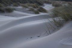 Duinen met gras bij de kust van de Noordzee in Zeeland in Nederland stock afbeeldingen