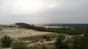 Duinen op het Curonian-Spit Stock Afbeelding