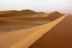 Duinen van Abu Dhabi Royalty-vrije Stock Foto's