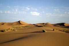 Duinen van de Woestijn van de Sahara stock foto