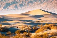 Duinen van het Mesquite de Vlakke Zand in het Nationale Park van de Doodsvallei, CA, de V.S. Stock Foto