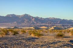 Duinen van het Mesquite de Vlakke Zand onder moutains Stock Foto