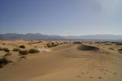 Duinen van het Zand van Mesquite de Vlakke Stock Foto's