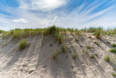 Duinen van Noordwijk aan Zee, Nederland Royalty-vrije Stock Fotografie