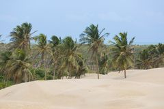 Duinen van Piaui, Brazilië royalty-vrije stock foto