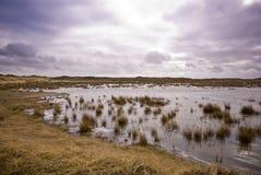 Duinen van Texel stock foto's