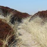 Duinlandschap in Zuiden van het Eiland Sylt Royalty-vrije Stock Afbeeldingen