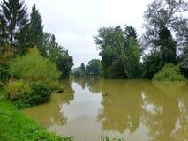 Duistere die rivier door de bomen wordt omringd stock fotografie