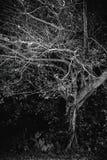 Duisternis achter de bomen Stock Foto's
