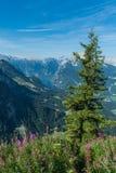 Duits Alpien landschap met Königsee in de vallei stock foto's