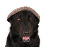 Duitse herder die een capp dragen Stock Afbeelding