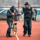 Duitse herderhond opleiding in Regionale Gomel Royalty-vrije Stock Afbeelding
