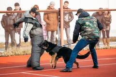 Duitse herderhond opleiding in Regionale Gomel Stock Foto's