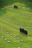 Duitse oorlogsbegraafplaats (La Cambe) Stock Foto